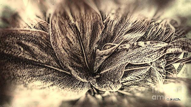 Charles Davis - Tea leaves 2