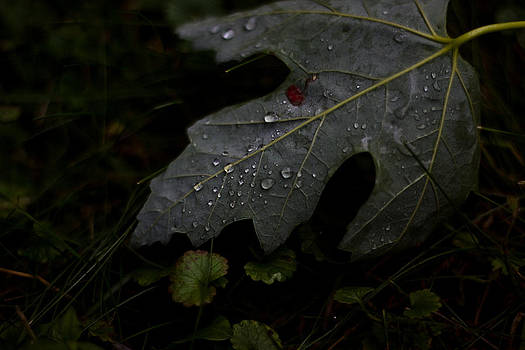 Tears of a Leaf by Michael Murphy