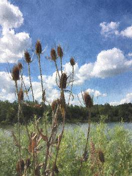 Teasel at Eagle Creek Park in Indianapolis by Victoria Porter