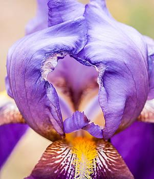 Lara Ellis - Temple of the Iris