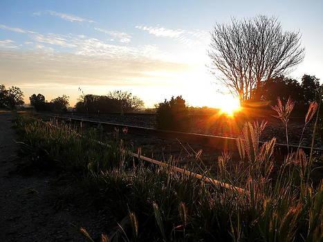 Templeton Tracks by Paul Foutz