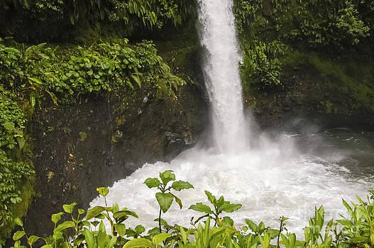 Bob Phillips - Templo Waterfalls Pool
