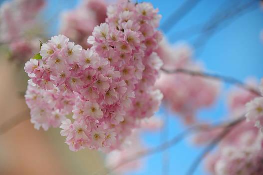 Jenny Rainbow - Tender Whisper. Pink Spring in Amterdam