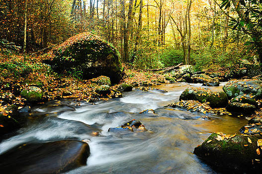 Tennessee Stream in Fall by Donald Fink