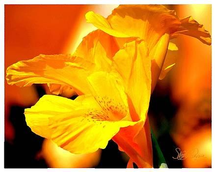 Tequila Sunshine by Sharon  Lavoie