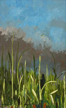 Terlingua Prairie by Anguspaul Reynolds