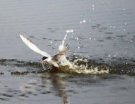 Tern by George Miller