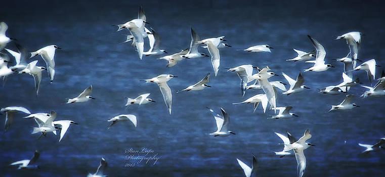 Tern Tern Tern by Stanley Lupo