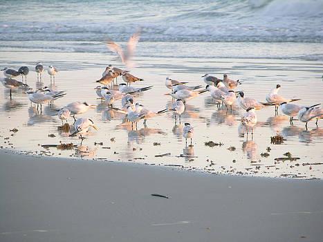 Terns And Gulls  by Julianne Felton