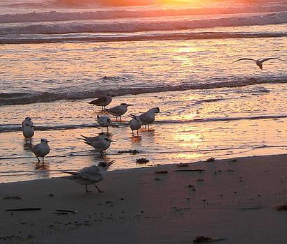 Terns At Sunrise 10-12-14  Julianne Felton by Julianne Felton