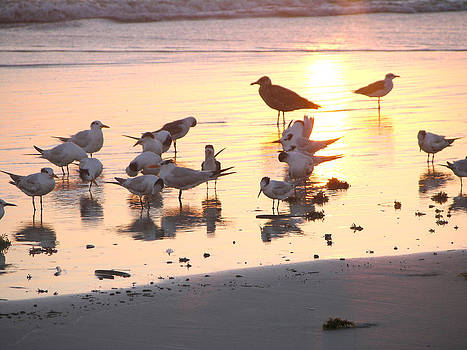 Terns At Sunrise With Seagull by Julianne Felton