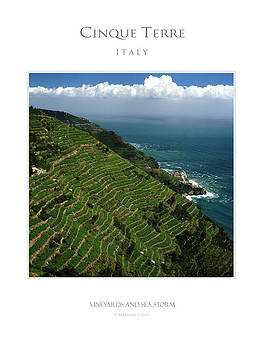 Terraced Vineyards by Massimo Conti