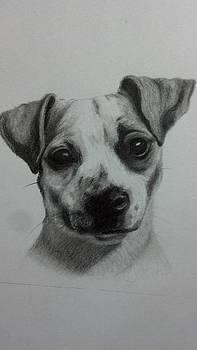 Terrier Mix by Michelle Harrington