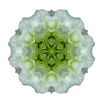 White and Green Begonia I Flower Mandala White by David J Bookbinder