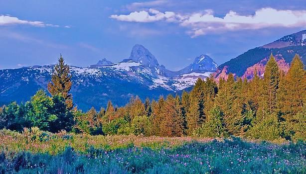 Teton Backside Wildflowers by Larry Bodinson