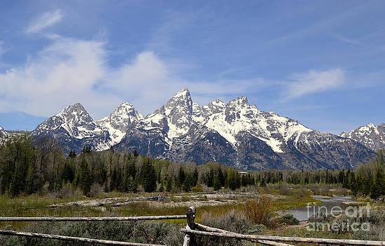 Teton Majesty by Dorrene BrownButterfield