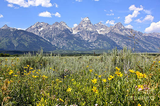 Teresa Zieba - Tetons and Wildflowers