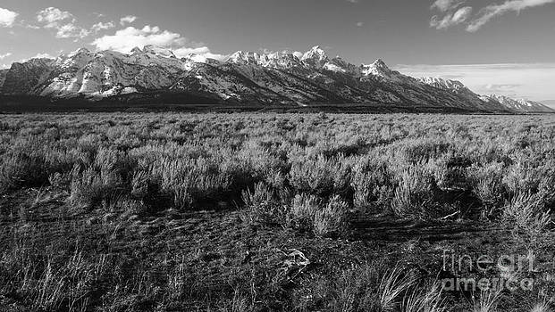 Tetons in Black and White by Edward R Wisell