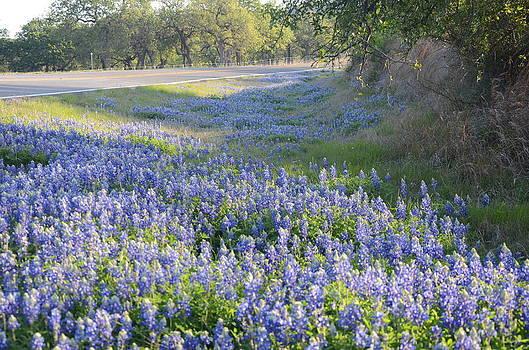 Texas bluebonnets by Brett Geyer