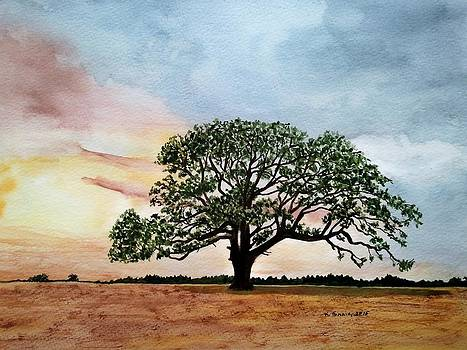 Texas Live Oak by B Kathleen Fannin