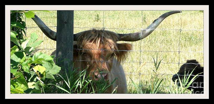 Gail Matthews - Texas Longhorn and Baby