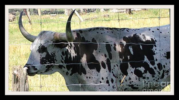 Gail Matthews - Texas Longhorn