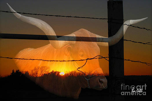 Texas Longhorn by Pam Carter