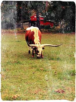 Texas Longhorn  by Tonya Mower Zitman