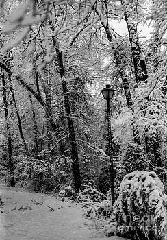 Texas Narnia by Michelle Burkhardt