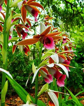 Shere Crossman - Texas Orchids