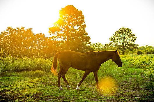 David Morefield - Texas Sunset