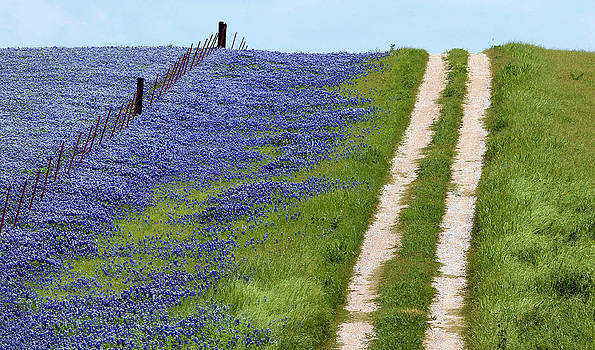Texas Trail by Elizabeth Hart