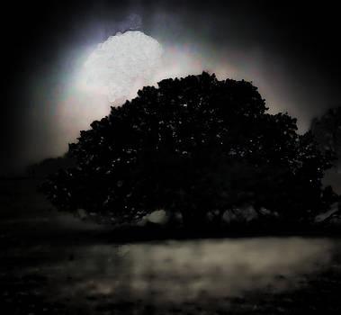 Joe Bledsoe - Texas Tree