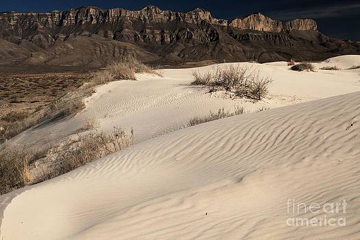 Adam Jewell - Texas White Sands