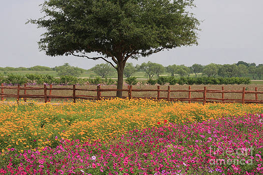 Texas Wildflowers by Jerry Bunger