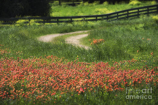 Texas Wildflowers  by Richard Mason