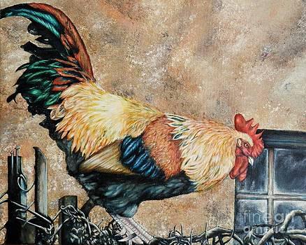 Texoma Rooster by Amanda Hukill