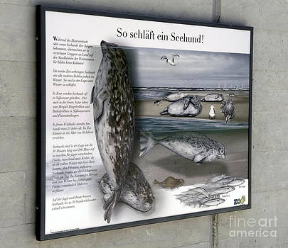 Text Example - Habitate of Common Seals - zoo interpretation panel by Urft Valley Art