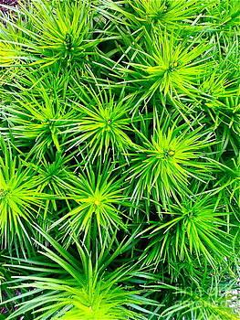 Texture Green 2 by Kimberly Nickoson