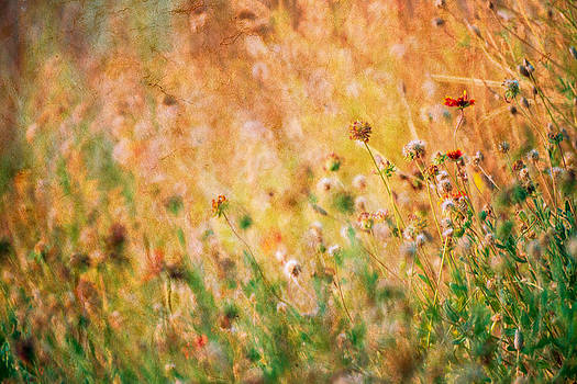 Textured fall meadow by Kim M Smith