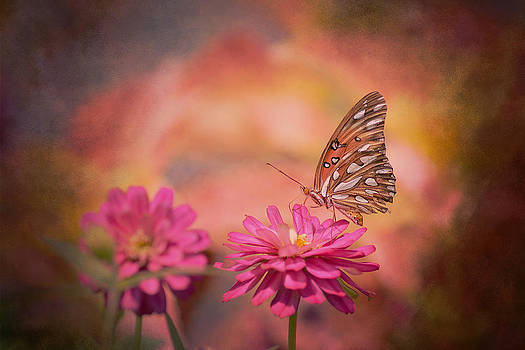 Textured Gulf Fritillary by Joel Olives