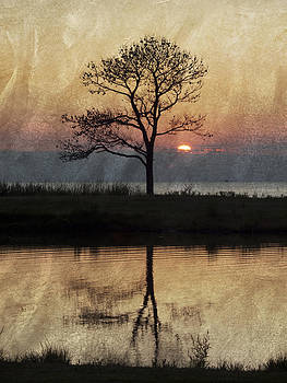 Maureen Cunningham - Textured Tree on the Bay
