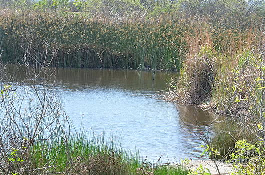 Textures of Ballona Wetlands by Kathy Vilim
