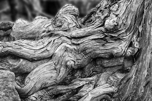 Jack Zulli - Textures of Nature Black and White