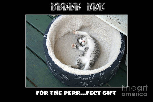 Thank You for the Perr......fet Gift Card by   Joe Beasley