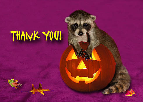 Jeanette K - Thank You Halloween Raccoon