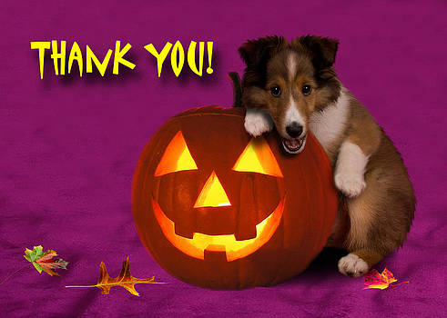 Jeanette K - Thank You Halloween Shetland Sheepdog
