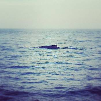 That's A #whale! #whalewatch In by Megan Rudman