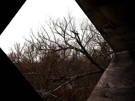 The Abandoned Bridge  by Stephani Vaughan