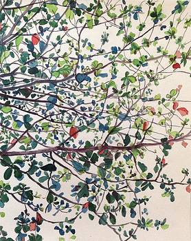Aditi Bhatt - The almond tree